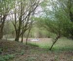 woodland-trust-006