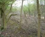 woodland-trust-009