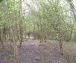 woodland-trust-010