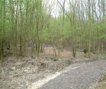 woodland-trust-016