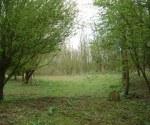 woodland-trust-002