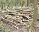 woodland-trust-005